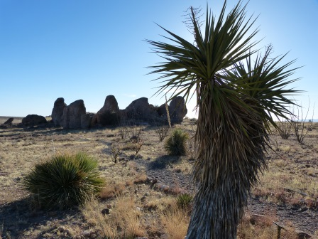 Yucca plant on desert with rocks in the background
