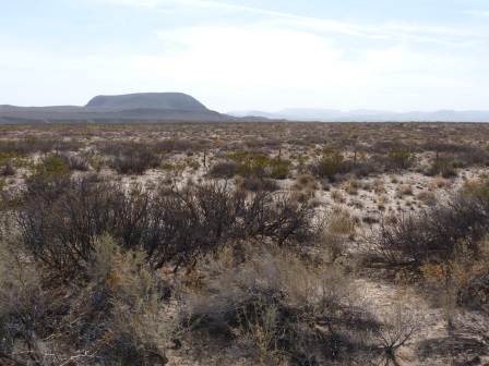 Dry desert with dry plats and not trees extending back to a mountain range in the background