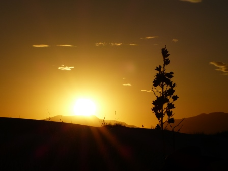 Sun setting over siloetted hills in the distance with a yucca flower int he foreground